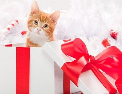 Редно ли е да връчите за подарък на мъж домашен любимец?
