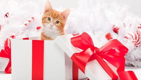 подарък на мъж домашен любимец